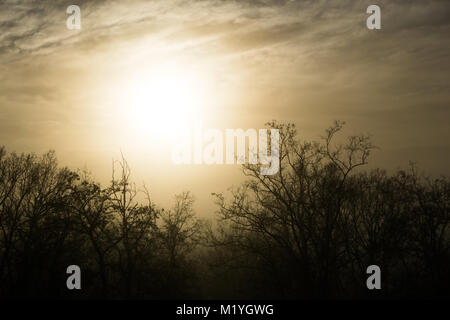 The sun trying to pierce the thick fog and creating a golden sky - Stock Photo