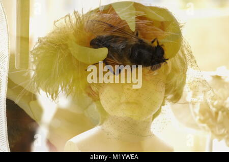 Double exposure dolls head with insect - Stock Photo