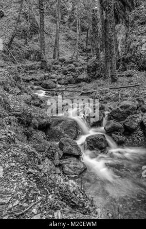 Monochrome black and white outdoor long exposure of a small stream / creek in winter or fall forest with stones,trees,moss,autumn - Stock Photo