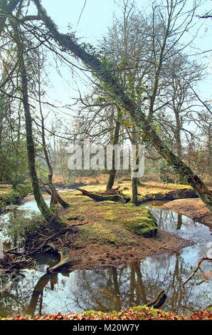 Winding New Forest Stream in Winter, Hampshire, England - Stock Photo