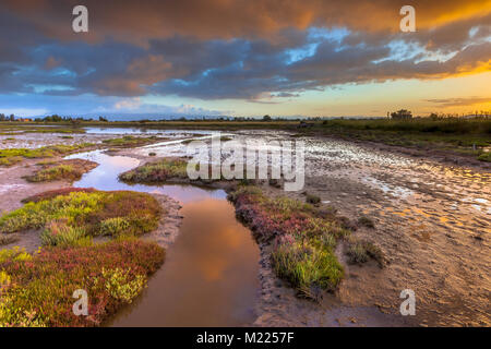 Sunrise over the salt tolerant Salicornia marsh vegetation on an estuary near Skala Kallonis on Lesbos island, Greece - Stock Photo