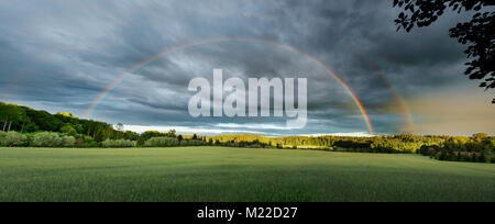 Rainbow over a field of wheat with a forest in the background - Stock Photo