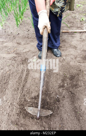 hoe in the hands of the gardener, hand in rubber gloves, in the background growing green - Stock Photo