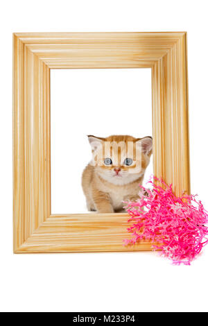 Little kitten in wooden photo frame, isolated on white - Stock Photo