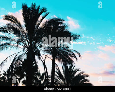 Palms silhouette against blue sky, Palm trees at tropical coast, vintage toned and stylized, coconut tree, summer, - Stock Photo