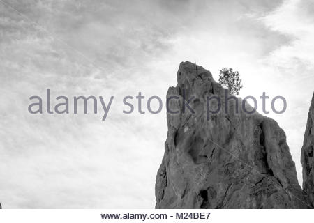 Single tree growing on rock. - Stock Photo