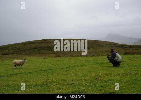 Man Photographing a Sheep, Quiraning, Isle of Skye, Scottish Highlands, UK. Autumn 2017. - Stock Photo