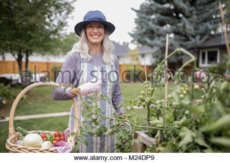 Portrait smiling senior woman gardening, harvesting vegetables in garden - Stock Photo