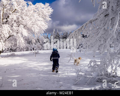 A boy and dog running through beautiful ice covered beech trees in the black forest. This is at a place called 'Schauinsland' - Stock Photo