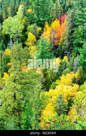 Vivid fall colours in northern ontario - Stock Photo