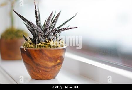 Succulent plants on window ledge in modern bathroom. Calgary, Alberta, Canada. - Stock Photo