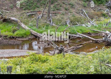 Dry trees and stream, Tierra del Fuego National Park, Ushuaia, Argentina - Stock Photo