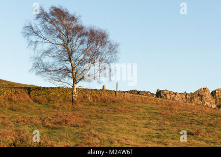 An image shot in the golden hour at Beacon Hill, Leicestershire, England, UK - Stock Photo