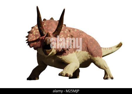 Triceratops horridus dinosaur (3d render isolated on white background) - Stock Photo