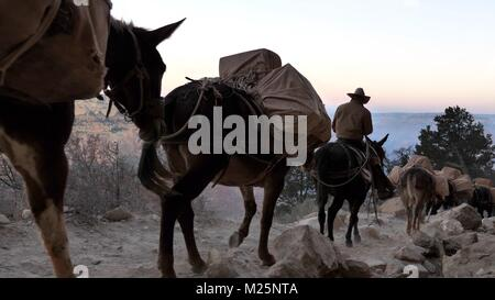 Mules convey on South Kaibab Trail at Grand Canyon - Stock Photo