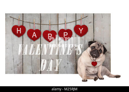 Cute pug puppy dog sitting down next to wooden fence of used scaffolding wood with red hearts and text happy valentines - Stock Photo