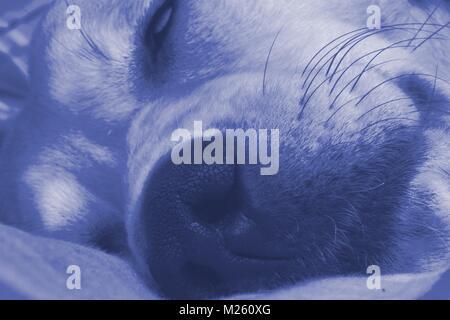 close up shot of sleeping dog - Stock Photo