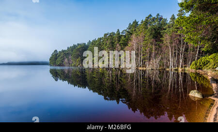 Loch Garten in the Strathspey area of the Cairngorms National Park, in Scotland. It is surrounded by the tall Caledonian - Stock Photo