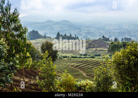 Green farmland fields landscape in Virunga volcano national park, Rwanda - Stock Photo