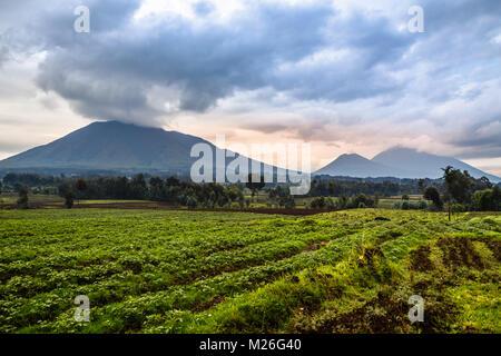 Virunga volcano national park landscape with green farmland fields in the foreground, Rwanda - Stock Photo