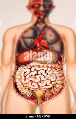 Medical illustration of human beings - Stock Photo