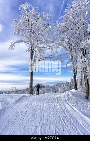 Single tourist, cross country skier is resting  on the top of the hill, under frosted tree, beech. Admires snow - Stock Photo