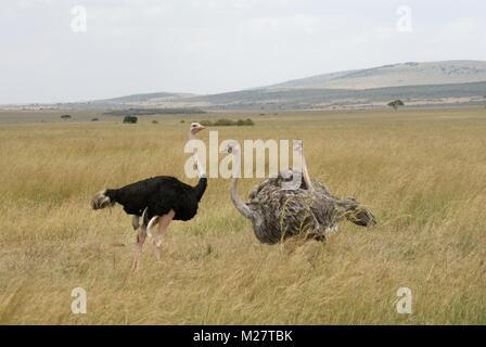 bird safari kenya south africa - Stock Photo