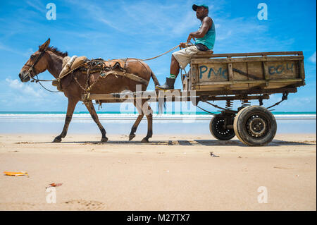 CAIRU, BRAZIL - MARCH 11, 2017: A mule pulls a wooden cart along the shore of a northeastern beach. - Stock Photo