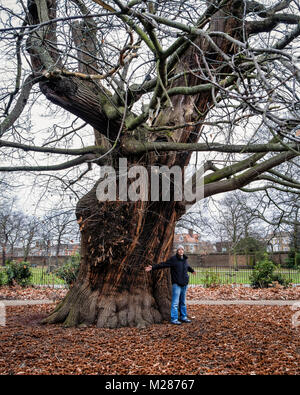 London UK. Man standing with outstrecthed arms next to giant tree in Greenwich Park - Stock Photo