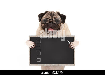 cute male pug dog puppy holding up blank checklist on blackboard with check boxes drawn with chalk, isolated on - Stock Photo