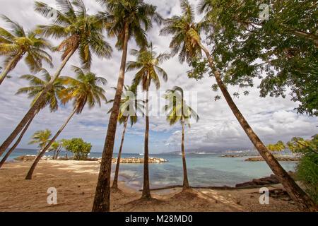 Coconut trees on Pointe du Bout beach - Les Trois Ilets - Martinique - FWI - Stock Photo