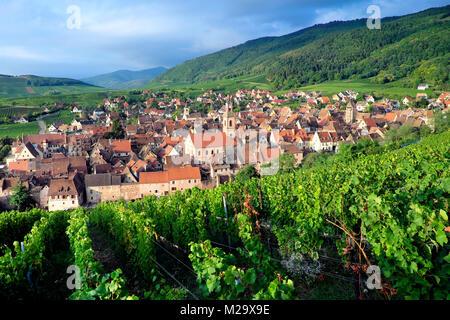 Vineyard, Riquewihr, Ribeauvillé Riquewihr, Haut-Rhin, Alsace, France - Stock Photo