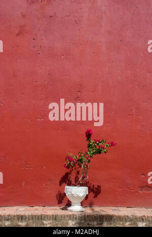 Outdoor flower pot with pink and red flowers on the stairs of a a white flower pot with pink flowers in front of a red painted wall stock mightylinksfo