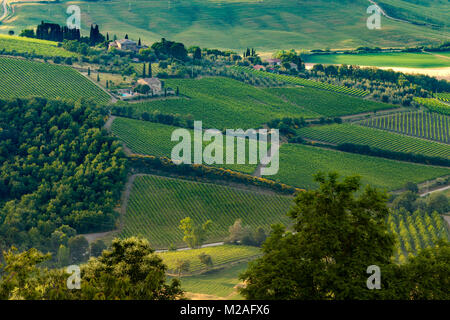Home to the famous Brunello di Montalcino wines, the rolling hills and vineyards  surrounding Montalcino, Tuscany - Stock Photo