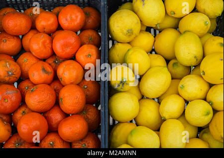 freshly picked oranges and lemons for sale in baskets, close up. - Stock Photo