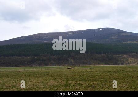 Looking Towards the Scottish Mountain Corbett Morrone/ Morven from Linn of Quoich, Cairngorms National Park, Scotland, - Stock Photo