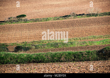 agriculture, farming cultivated fields prepared for planting crops, cornwall, uk. - Stock Photo