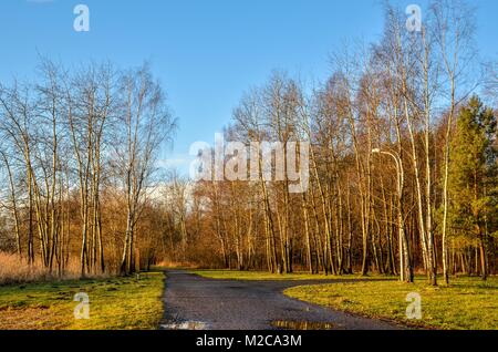 Colorful morning landscape. Gravel road in a beautiful park. - Stock Photo