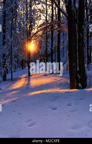 Winter mountains landscape. Scenic view of sunset in forest, snow covered trees, sunlight is reflected in the snow. - Stock Photo