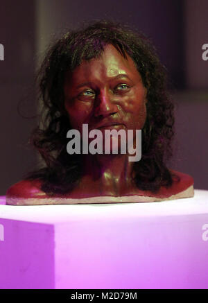 Full facial reconstruction model of a head based on the skull of Britain's oldest complete skeleton on display during - Stock Photo