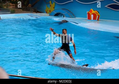A man surfing on a dolphin in a pool - Stock Photo