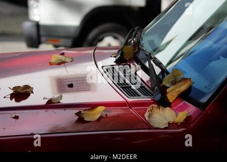 Dry fallen leaves on top of a red car - Stock Photo