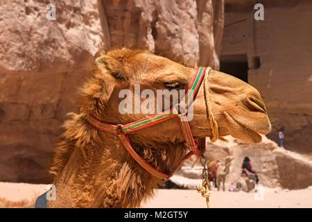 Side view of a camel face in rose city of Petra, Jordan - Stock Photo