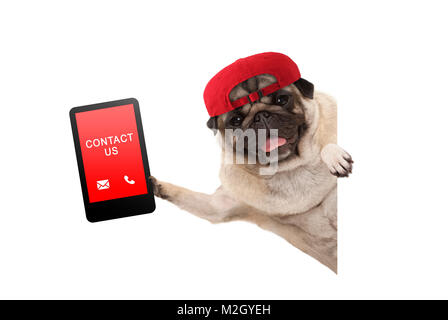 frolic pug puppy dog with red cap, holding up tablet phone with text contact us, hanging sideways from white banne, - Stock Photo