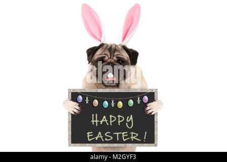 Easter bunny pug puppy dog with ears, eggs and blackboard with text happy easter, isolated on white background - Stock Photo