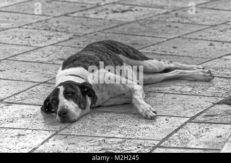 Dog lying down on a street. Black and white photo - Stock Photo
