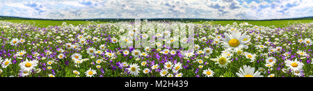 spring landscape panorama with flowering flowers on meadow. white chamomile and purple bluebells blossom on field. - Stock Photo
