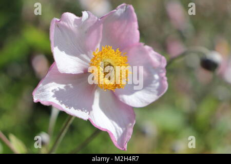 Flowers, plants, ornamental features in Pitmedden Garden, near Ellon, Aberdeenshire, Scotland UK - Stock Photo