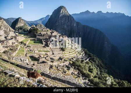 Morning in Machu Picchu - Stock Photo