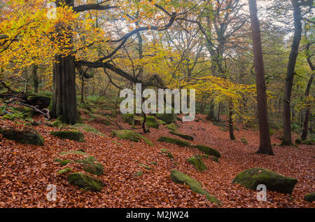 An  ancient wooded area of Padley Gorge in the hope valley of the peak district national park  England.UK - Stock Photo